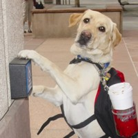 New VA Program Adopts Dogs and Matches Them with Wounded Warriors