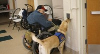 Study examines impact of service dogs on veterans with PTSD